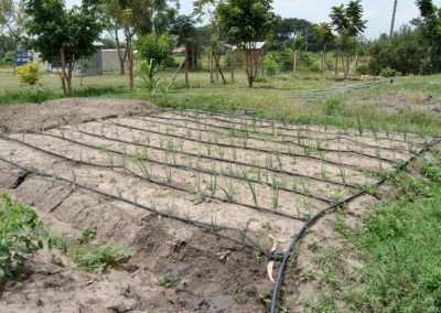 Zonnepomp en irrigatie