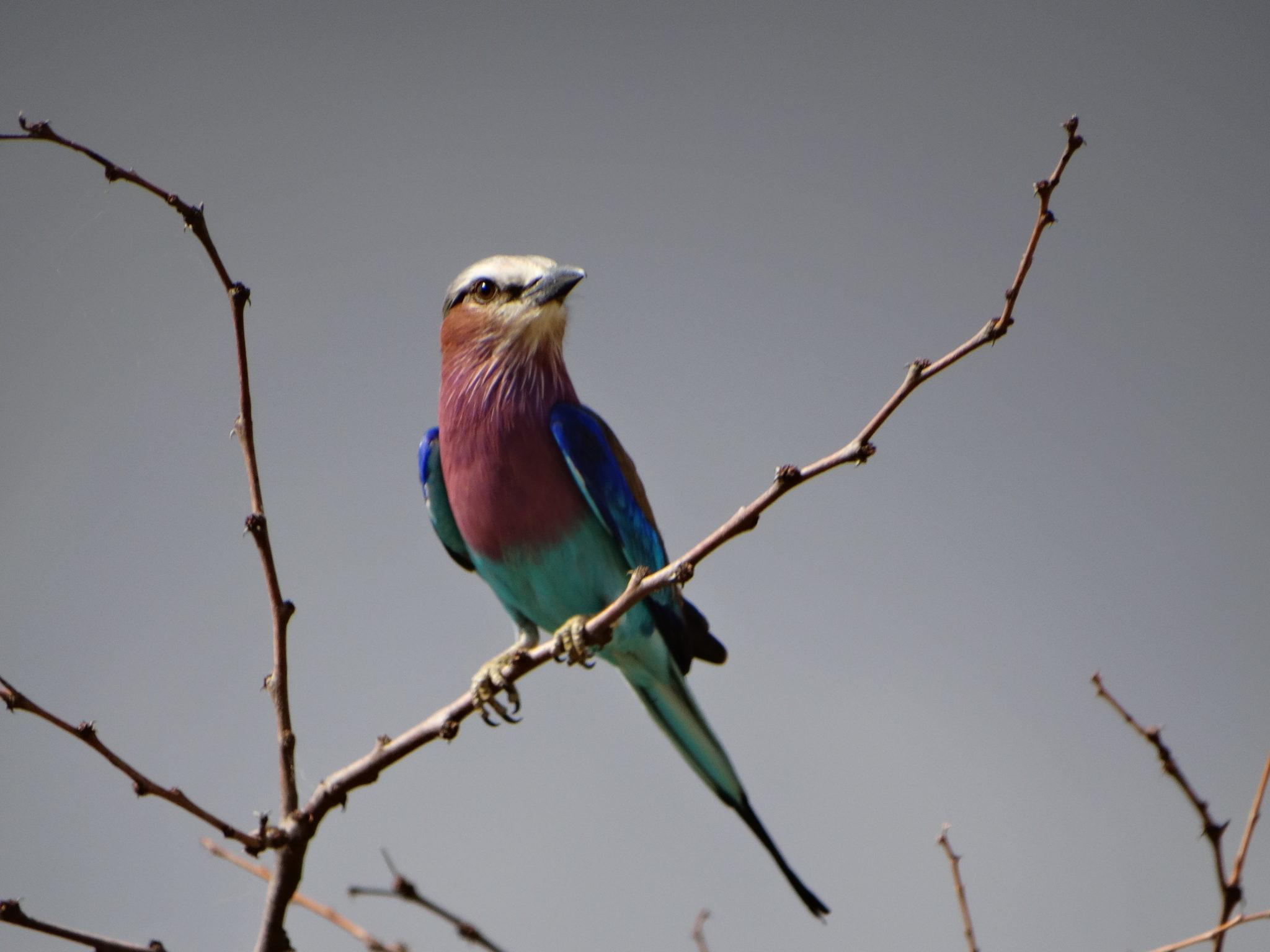 Een kleurrijk vogeltje, waarvan de naam ons helaas niet meer te binnen schiet