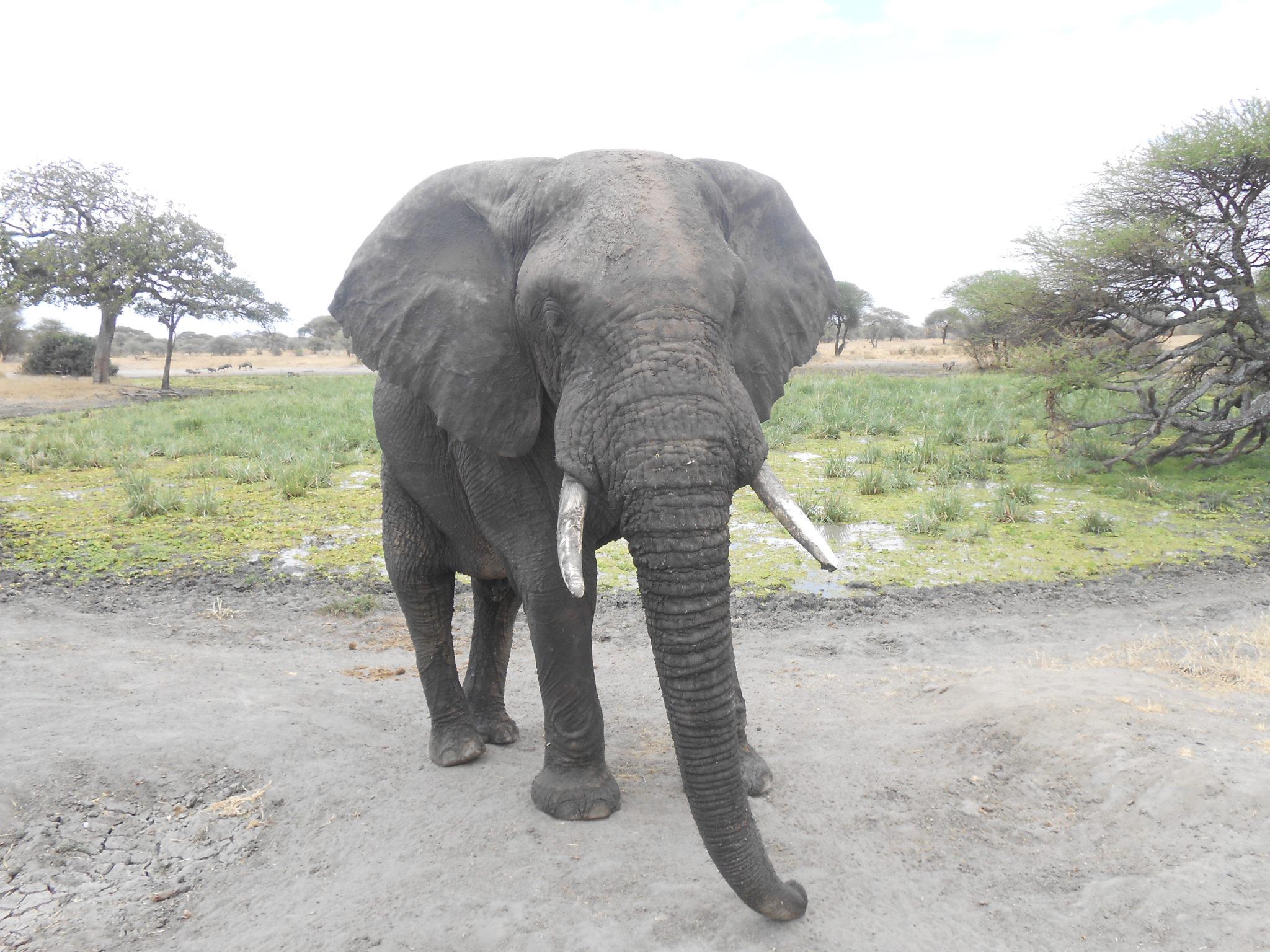 Deze olifant kwam dag zeggen tot op 2 meter van onze jeep