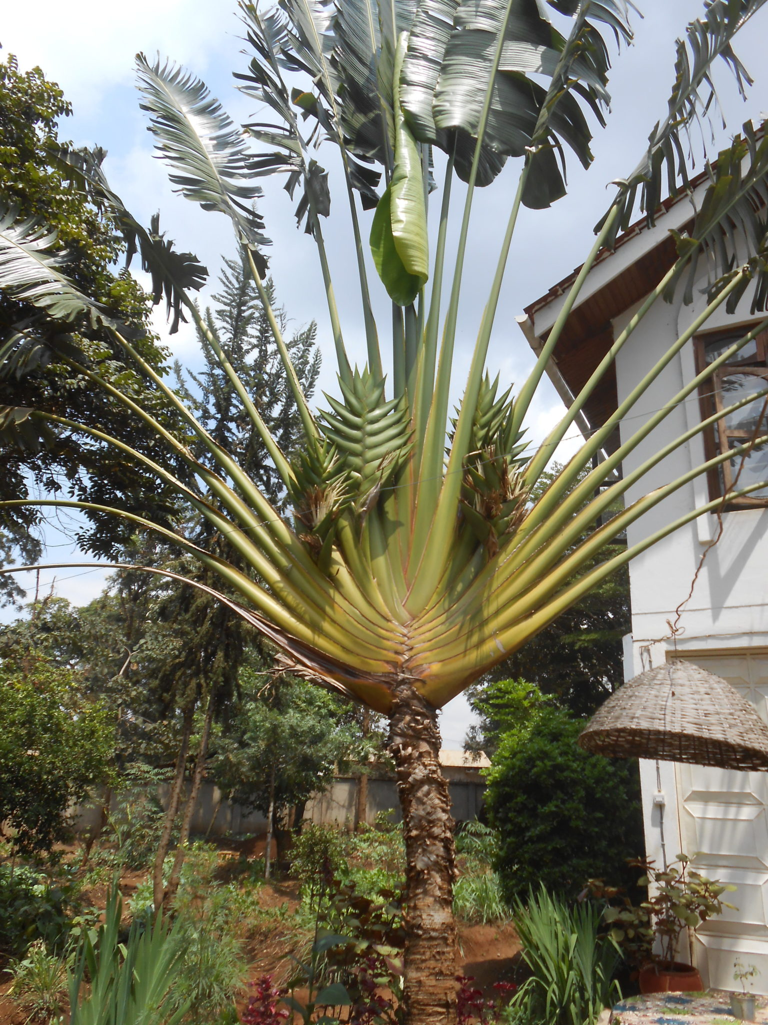 Een supercoole palmboom!